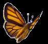 Logo représentant un papillon